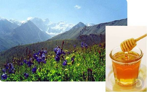عسل الجبل