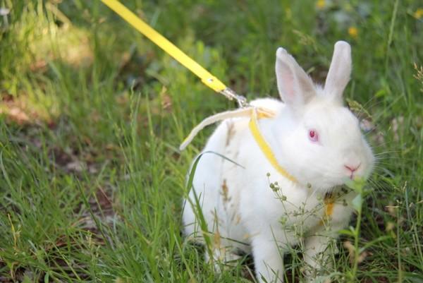 كيفية رعاية الأرانب