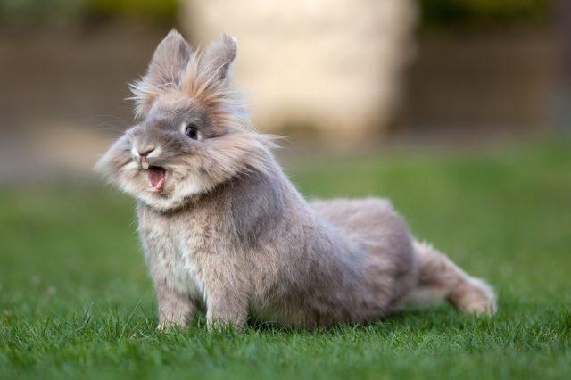 التهاب الأنف في الأرانب: الأعراض والعلاج والوقاية