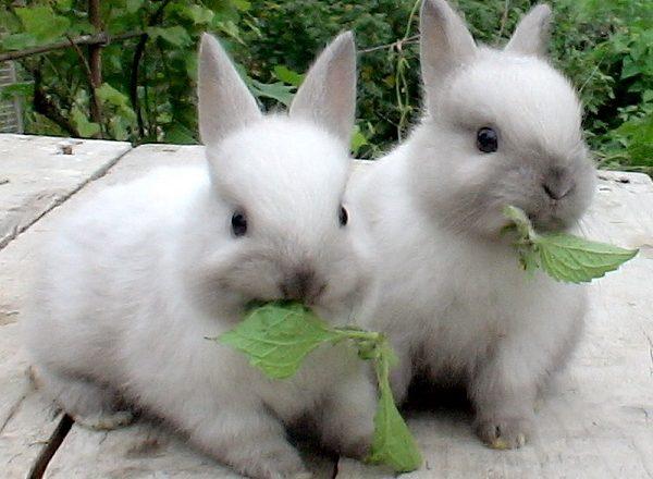 ما لتغذية الأرانب