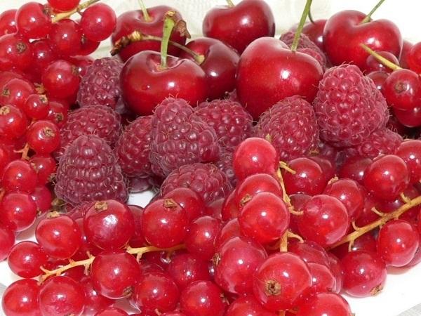 14 التوت الأحمر الأسماء والأنواع والأشجار مع التوت الأحمر