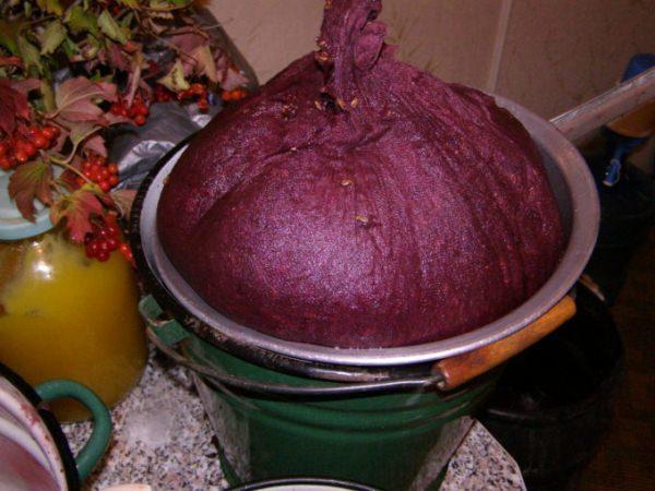 لجعل النبيذ العطرية واللذيذة ، فمن الضروري فرز كل التوت من الحشرات ، منفصلة التوت الأخضر ومدلل.