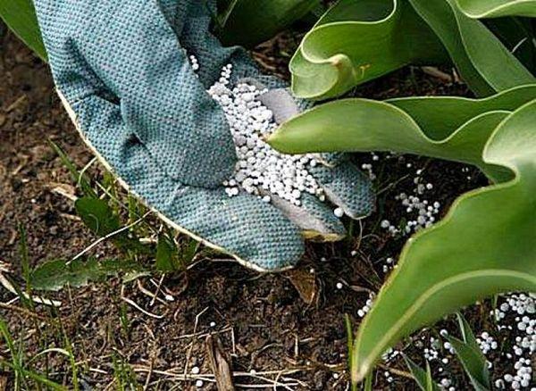 الأسمدة النيتروجينية للنباتات