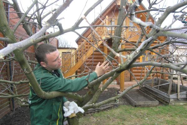 الأسمدة الفوسفاتية تقوي الأشجار
