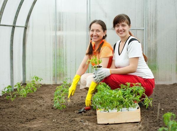 زرع الشتلات في البيوت المحمية تبدأ في أواخر أبريل