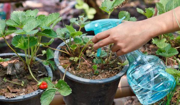 استخدام كبريتات المغنيسيوم للنباتات