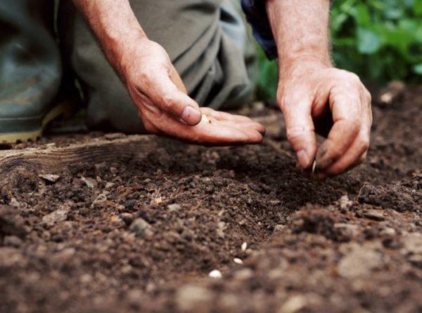 تحضير البذور للبذر
